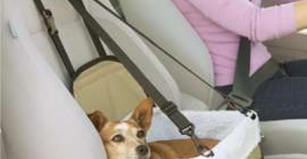 Taška do auta s vreckom na prednej strane na prenos mačiek a psov. Pre bezpečné a pohodlné cestovanie vašich štvornohých miláčikov.